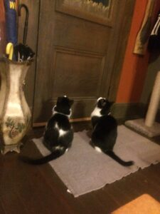 Two cats staring at the front door