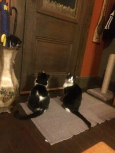 Two cats at the door